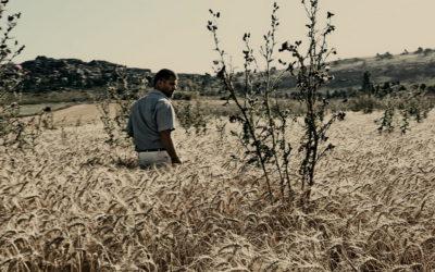 Le Grain Et L'Ivraie